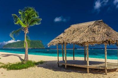 Tropical vibrant natural beach on Samoa Island with palm tree an