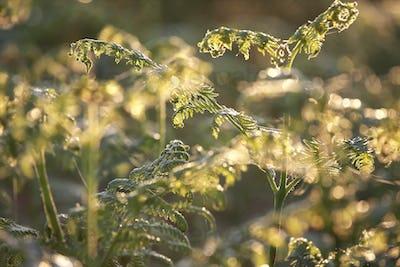 fern plants in morning sunshine