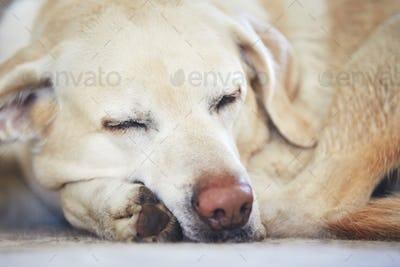 Dog sleeping on the carpet