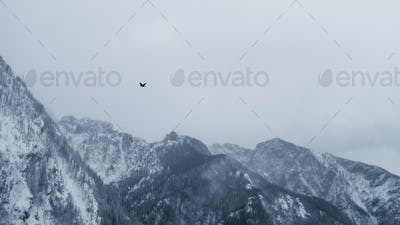 alpine winter bird