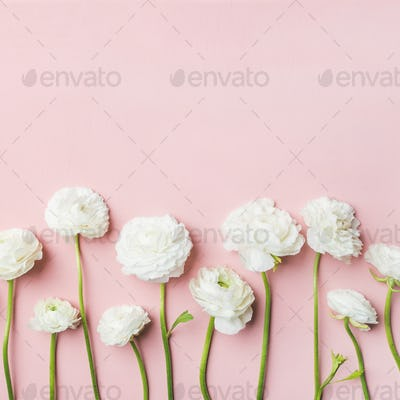Saint Valentines Day background with ranunculus flowers, square crop