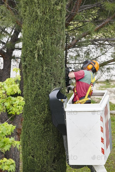 Equiped worker pruning a tree on a crane. Gardening works