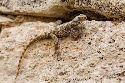 Lizard sitting on the stone