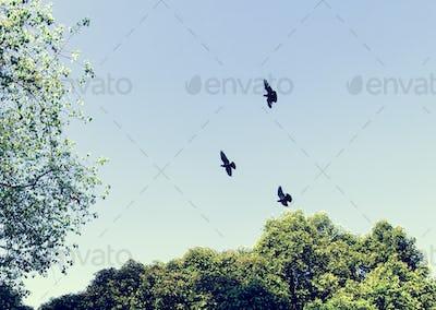 Birds flying in the blue sky