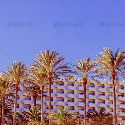 Tropical vintage mood. Palms. Minimal design art