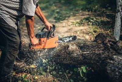 Male lumberjack cutting fire wood using professional chainsaw