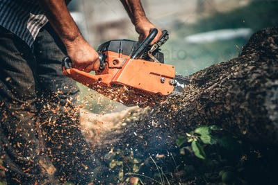 portrait of lumberjack cutting tree in the garden with gasoline chainsaw.