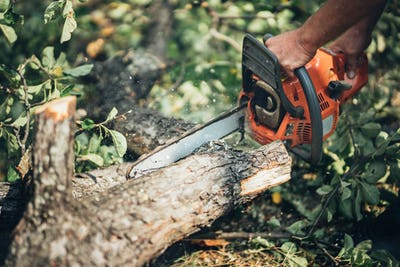 Chainsaw in action cutting fire wood. Man cutting wood with professinal chainsaw