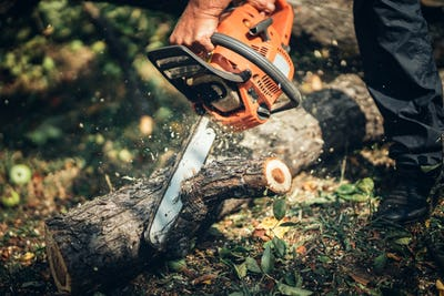 Trunk cutter, wood and timber slicing. Male Forester cutting logs