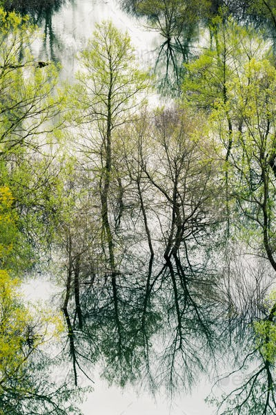 Trees reflected in the waters of the Skadar Lake
