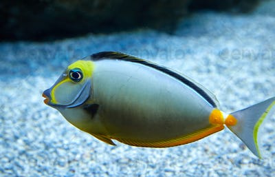 purdy fish swimming in marine aquarium