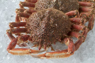 Fresh raw spider crabs on ice