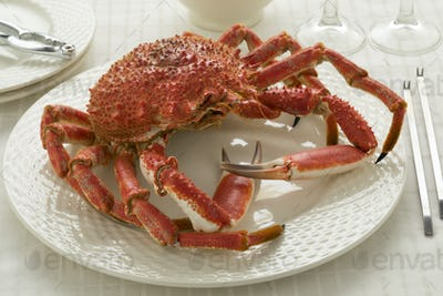 Whole cooked spider crab