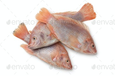 Fresh raw red tilapia fishes