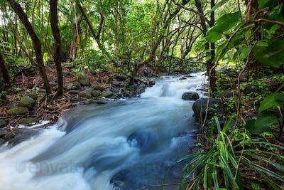 Creek in jungle
