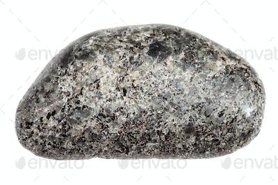 polished Peridotite with Phlogopite stone isolated