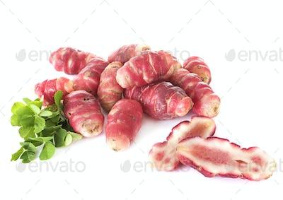 Oxalis tuberosa