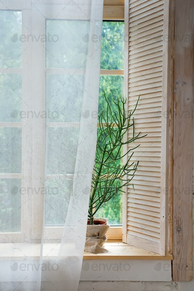 Glass windows with white curtains and flower in a pot