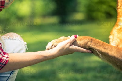 woman hold dog paw,friendship and love concept