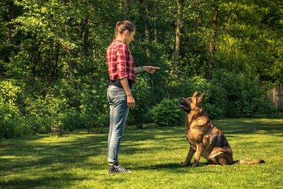 Young woman train german shepherd dog to sit