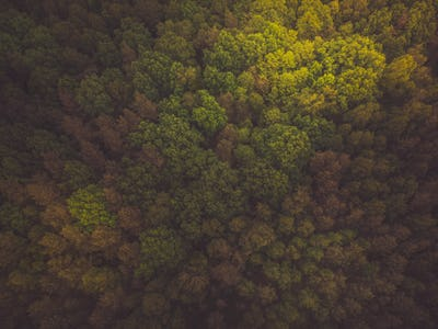 Toned aerial image of wild forest