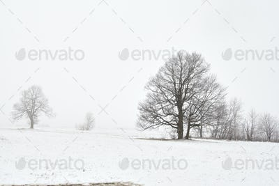 Winter Landscape with Bare Trees