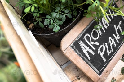 "Small blackboard with ""Aromatic Plant"" inscription"