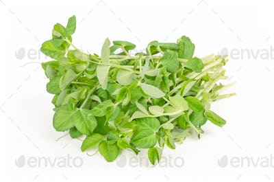 Bunch of snow pea microgreen front view