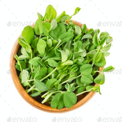 Snow pea microgreen in wooden bowl over white
