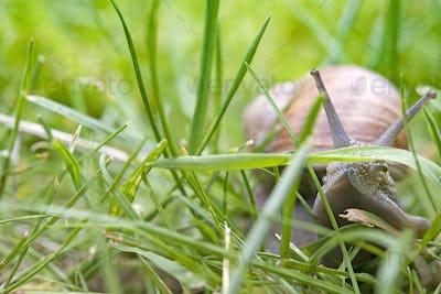 snail crawling