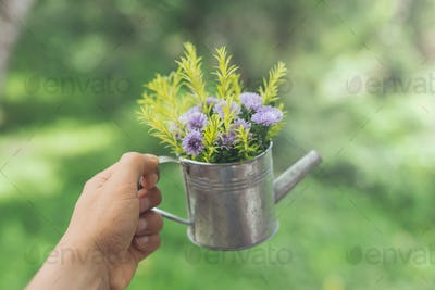 Hand holding decorate flowers in pot