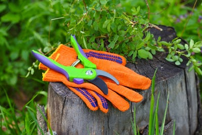 Garden gloves with a pruner for working in the garden
