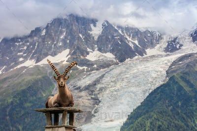 Ibex, Range of Mont Blanc. French Alps