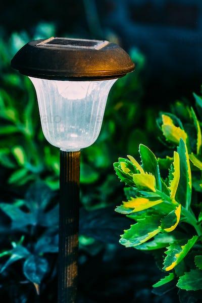 Solar Garden Light, Lantern In Flower Bed. Garden Design. Solar