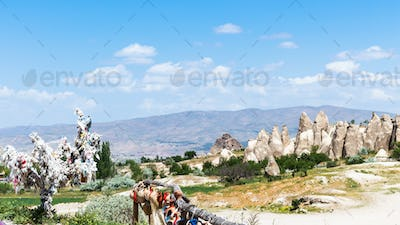 ornamental tree and cave churches near Goreme