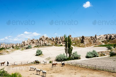 horse paddock near ancient settlement near Goreme