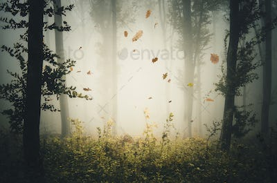 Leaves falling in mysterious autumn forest with fog