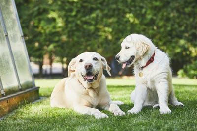 Two playful dogs on garden