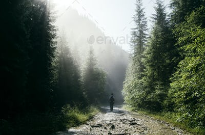 Man on mountain road with sun rays and pine trees