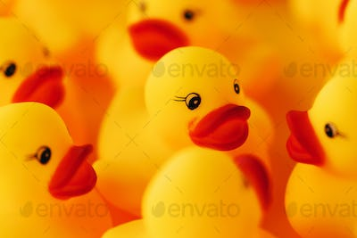 Group of rubber ducks chatting