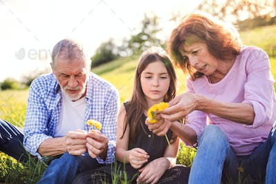 Senior couple with grandaughter outside in spring nature, making dandelion wreath.