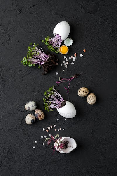 Fresh watercress salad in eggshell and quail eggs on a black bac