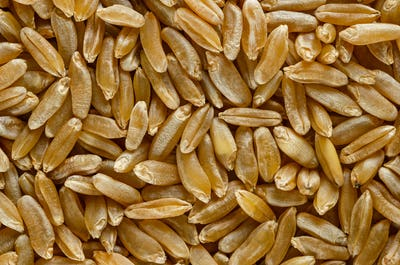 Kamut Khorasan wheat macro photo from above