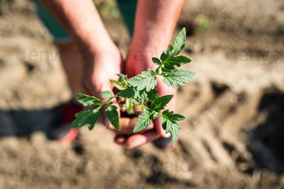 Hands holding soil and plant