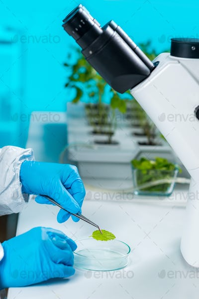 Plant laboratory. Biology technician working with plants