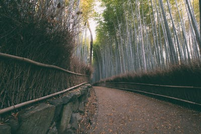 Wandering through the Bamboo Forest