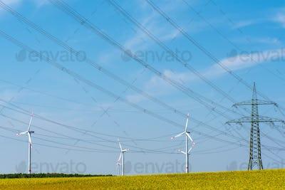 Power transmission lines in a field of flowering oilseed rape