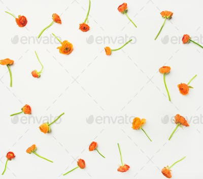 Flat-lay of orange buttercup flowers over white background, copy space