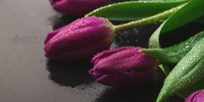 Bouqet of purple tulips on wooden background