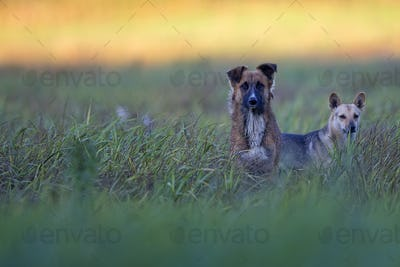 Dogs in a clearing